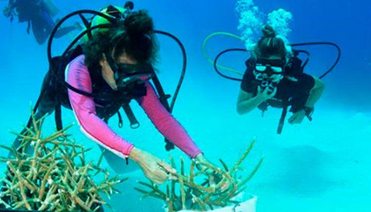 Restauración de arrecifes de coral en Guanahacabibes